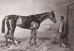 Európa-szerte magyar csodaként emlegették a 19. század végén a képen látható Kincsem versenylovat (szül.: 1874), amely 54 futását 54 győzelemmel fejezte be. Hat ország tizenkét lóversenypályáján veretlen maradt a Tápióbicskén tenyésztett angol telivér, am