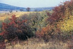 Dunántúli táj, ősszel